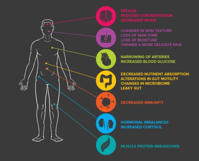 Stress in the Body