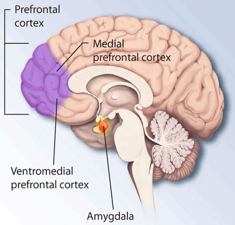 Movement through the Prefrontal Cortex